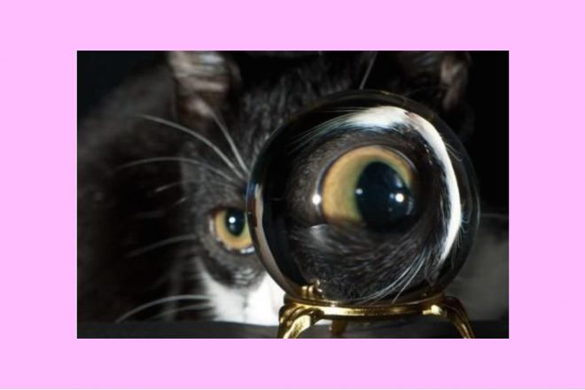 Cat crystal magnifying glass Strong Eye Astrology Horoscopes The Numinous