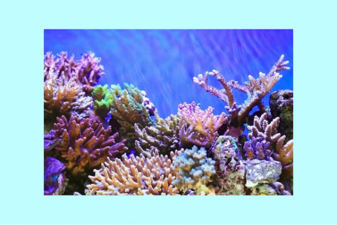 Numinous weekly horoscopes coral reef Strong Eye Astrology The Numinous