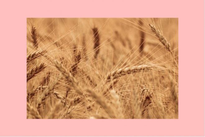 Numinous weekly horoscopes Strong Eye Astrology The Numinous field of wheat