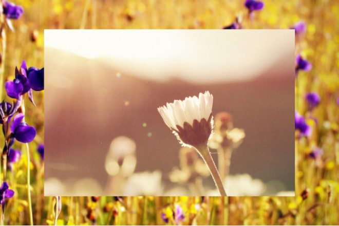 Numinous weekly horoscopes April 3 2017 Strong Eye Astrology flowers in the sun