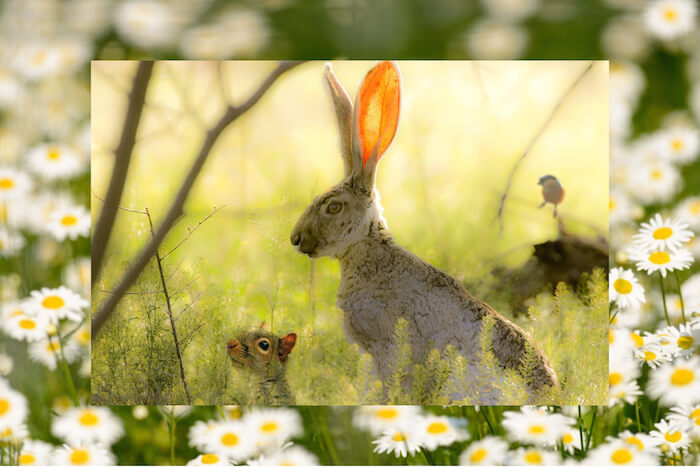 Numinous weekly horoscopes bunny in field The Numinous Strong Eye Astrology