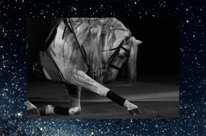 Numinous weekly horoscopes dressage horse strong eye astrology June 25