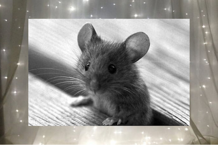 numinous weekly horoscopes tiny mouse